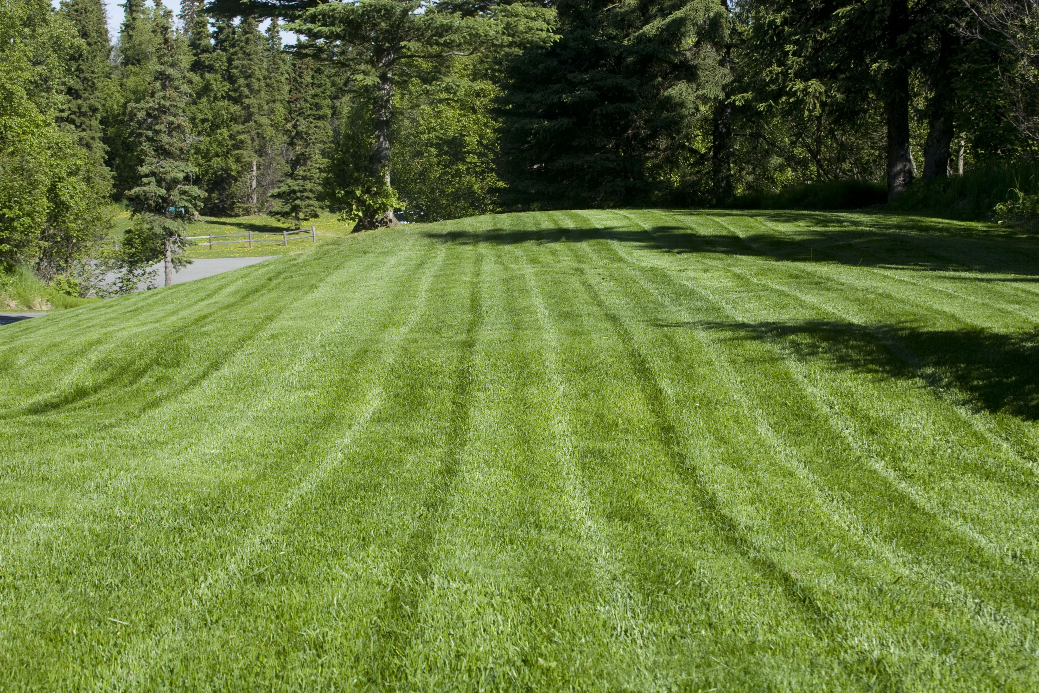 Keep Your Property Green: Lawn Care Tips For Luscious Lawns