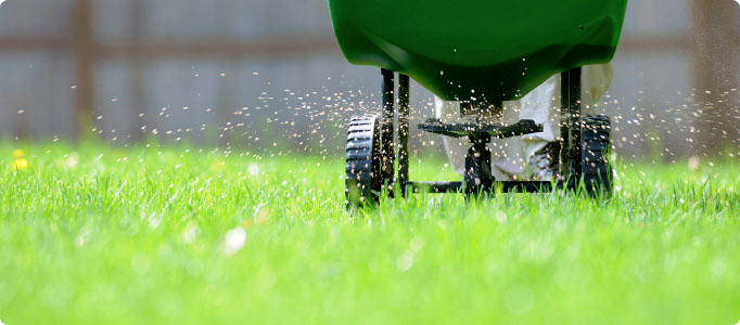 Why You Should Fertilize Regularly